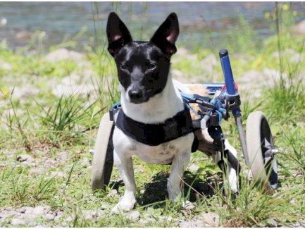 Handicap & Oldies (Hundeschule für Handicap- & Senior-Hunde) - Gratisinserat.ch