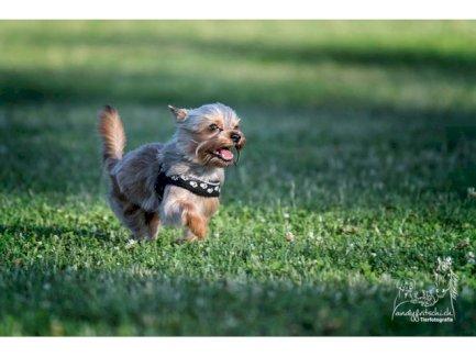 Come & Wait – Hundeschule (Abruf- und Bleib-Training) - Gratisinserat.ch