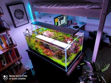 Set Tolle Aquarienpflanzen inkl. Versand - Gratisinserat.ch