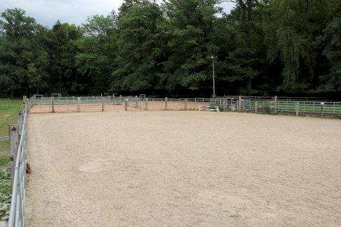 Pferdeboxen zu vermieten - Gratisinserat.ch