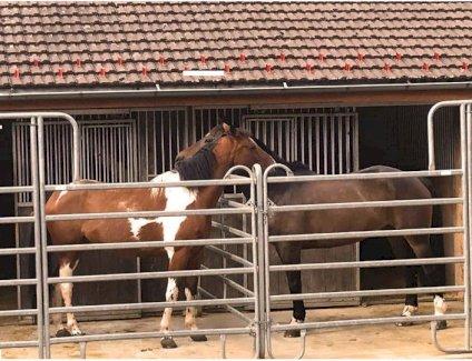 StartseiteMittellandBE Pferdeboxen in Lamboing Berner Jura zu vermieten ab sofort 2516 Lamboing, Schweiz - Gratisinserat.ch