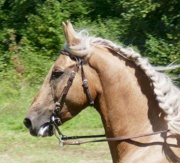 Pferd ans Futter - Gratisinserat.ch