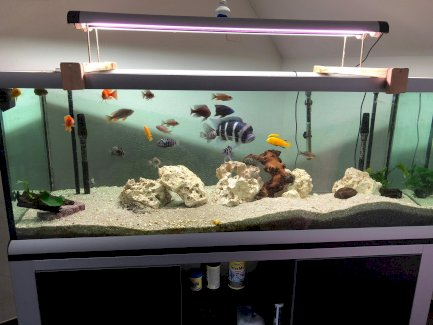 Aquarium - Gratisinserat.ch