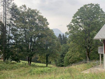 Holz - Bergahorn - Gratisinserat.ch