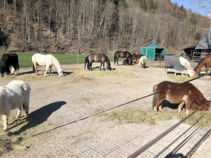 Pferde Pensionsplätze frei - Gratisinserat.ch
