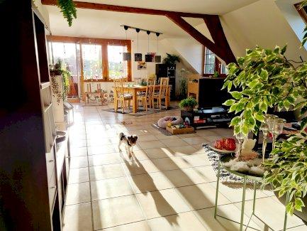 Zu vermieten 4.5 Zimmer-Dachwohnung - Gratisinserat.ch
